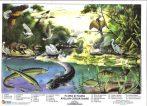 Flora și fauna apelor curgătoare - planșă de perete