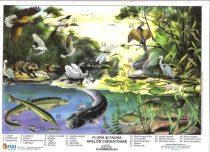 Flora si fauna apelor curgatoare - plansa de perete