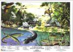 FIXI - Flora si fauna apelor curgatoare