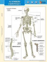 Az emberi csontváz I-II. DUO tanulói munkalap- Scheletul omului I-II. DUO fisă de studiu