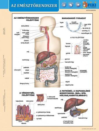 Az emésztőrendszer + Az emésztés DUO tanulói munkalap- Sistemul digestiv+ Digestia filă de studiu DUO