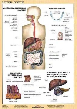 Sistemul Digestiv - plansa de perete